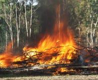 Våldsamma flammor som rasar brand arkivbilder