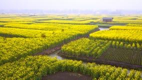 Våldta blommafältet Fotografering för Bildbyråer