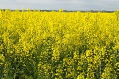 Våldta blommor i ett fält Royaltyfria Foton