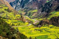 Våldta blommor i Yunnan, Kina arkivbilder
