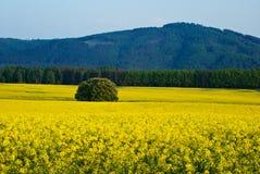 Våldta fält, forested berg i bakgrunden Arkivbild