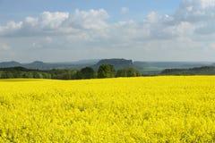Våldta fältet i tidig vår i Sachsen, Tyskland Royaltyfri Fotografi