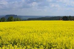 Våldta fältet i tidig vår i Sachsen, Tyskland Arkivfoton