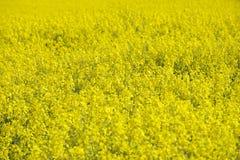 Våldta fältet i tidig vår i Sachsen, Tyskland Fotografering för Bildbyråer
