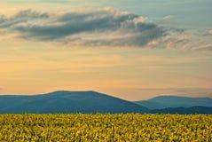 Våldta fältet i vårblom, kulör solnedgånghimmel Arkivfoton