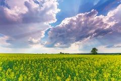 Våldta fältet och dramatisk himmel Arkivfoton