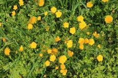 Våräng med gräs och vildblommor Royaltyfri Foto