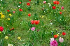 Vårängar med färgrika blommor Royaltyfria Foton
