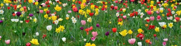 Vårängar med färgrika blommor Arkivbild