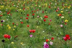 Vårängar med färgrika blommor Arkivfoto