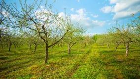 Våräppleträdgård med blommor och maskrosor, Time-schackningsperiod lager videofilmer