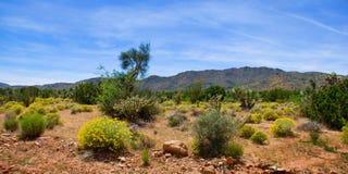 Vårökenblom i Arizona royaltyfri fotografi