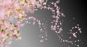 Vår Cherry Blossom royaltyfri illustrationer
