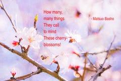 Vår Cherry Blossom Haiku Fotografering för Bildbyråer