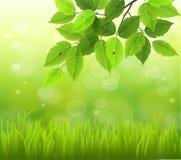 Vår- eller för natur för abstrakt begrepp för sommarsäsong bakgrund Arkivbild