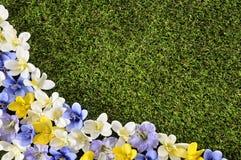 Vår- eller sommarbakgrundsgräns royaltyfria foton