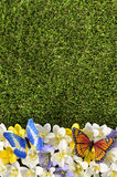 Vår- eller sommargränsbakgrund royaltyfria bilder