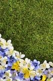 Vår- eller sommargränsbakgrund Arkivfoto