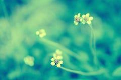 Vår för gräsblommaabstarct, naturbakgrund Arkivfoto