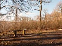 vår för höst för UK för inre skogsmark för träbänk kal inga personer Royaltyfri Fotografi