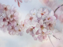 Vår för Sakura blommavattenfärg Royaltyfri Fotografi