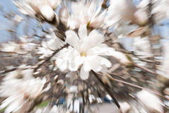 Vår Forest Abstract Swirl, selektiv fokus royaltyfria foton