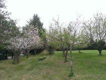 Vår fruktträdgård Royaltyfri Fotografi