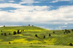 Vår i Blacket Hills South Dakota royaltyfria foton
