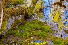 Vår i den Siberian taigaen arkivfoton