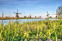 Vår i Kinderdijk Arkivbilder