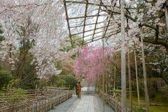 Vår i Kyoto, Japan Arkivfoton