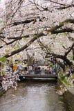 Vår i Kyoto, Japan Arkivbilder