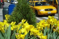 Vår i New York City royaltyfria bilder