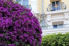 Vår i Nice Arkivbild