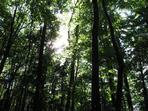 Vår i skogen Arkivbild