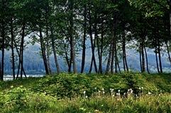 Vår i thanen, Alaska royaltyfri bild