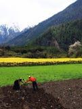 Vår i Tibet Fotografering för Bildbyråer