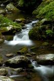 Vår i Tremont på den Great Smoky Mountains nationalparken, TN USA arkivbilder