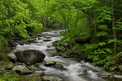 Vår i Tremont på den Great Smoky Mountains nationalparken, TN USA Fotografering för Bildbyråer