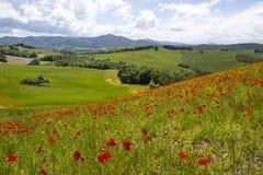 Vår i Tuscany Fotografering för Bildbyråer