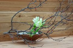 Vår Ikebana, japansk blom- ordning arkivbild