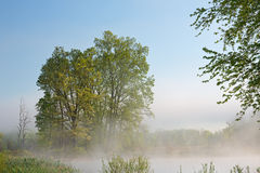 Vår Jackson Hole Lake i dimma arkivfoton