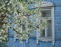 Vår körsbärsröda blomningar Royaltyfria Bilder