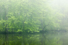 Vår Kalamazoo flod i dimma Arkivbilder