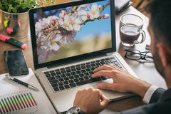 Vår mandelträd som blommar på en datorskärm hans mankontorsworking arkivfoto