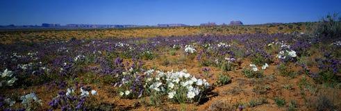 Vår monumentdal, Arizona fotografering för bildbyråer