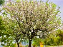 Vår- och sommarseason's med vita blommor och grönskaträdskönhet Arkivbilder