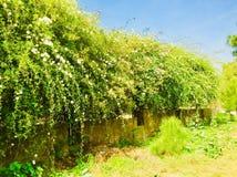 Vår- och sommarseason's med vita blommor och grönskaträdskönhet Royaltyfri Bild