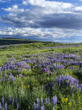 Vår på Casper Mountain Wyoming Royaltyfri Bild