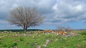 Vår på Golanet Heights Arkivfoton